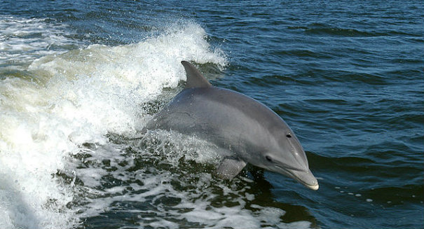 Amazing discovery: Dolphins communicate using words and sentences