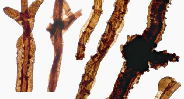 Scientists stunned to find 440-million-year-old fungus
