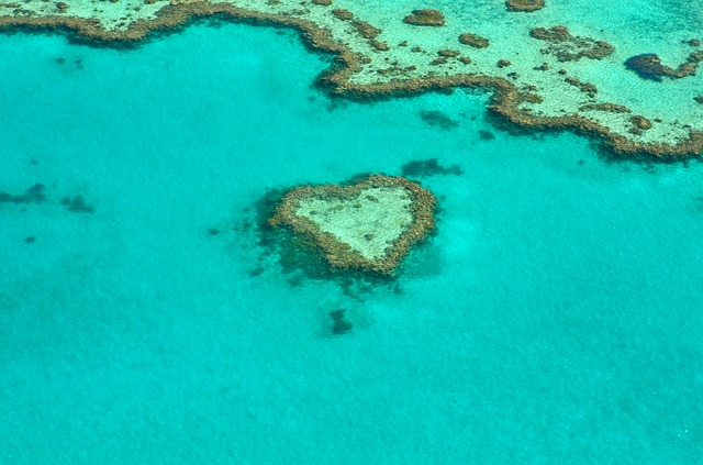 Something awful is happening at the Great Barrier Reef
