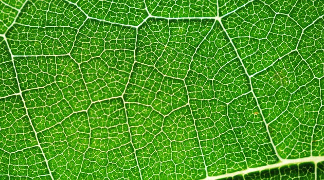 Could this bionic leaf be the answer to lowering harmful greenhouse gases?