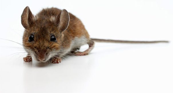 How to turn a mouse into a cold-hearted killer