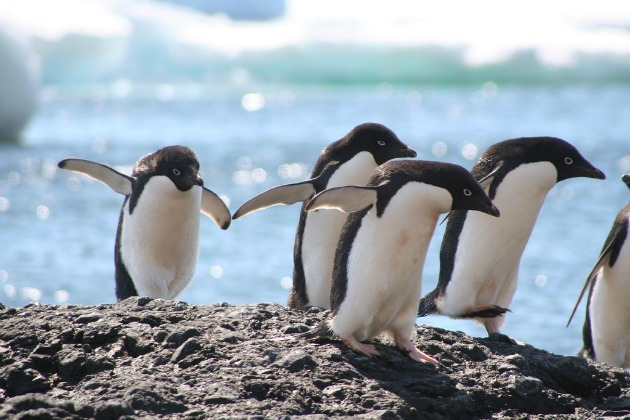 Shocking study: Climate change could decimate penguin population by 60% this century