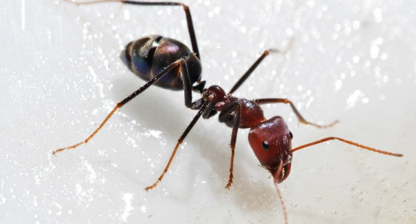 Huge discovery about ants stuns scientists