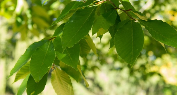Scientists astonished by major tree discovery