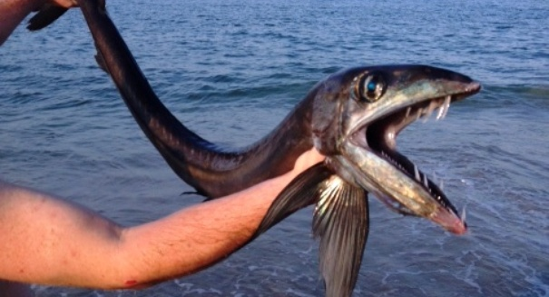 New app empowers fishing enthusiasts to help endangered aquatic species