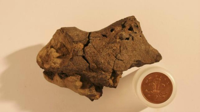 Amazingly rare dinosaur brain tissue found for the first time