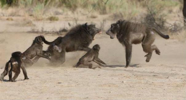 Scientists stunned by baboon discovery