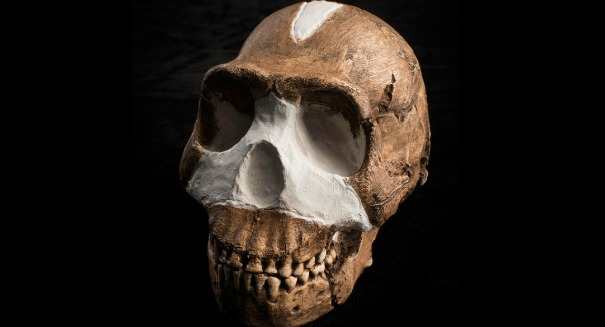 Early human ancestor was a whiz with tools