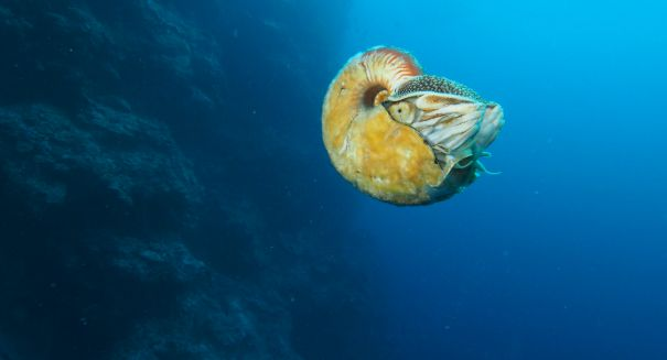 Scientists stunned after rarest creature in the world spotted in South Pacific