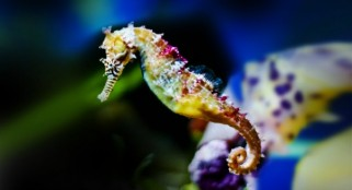 Shocking seahorse discovery could shed light on evolution