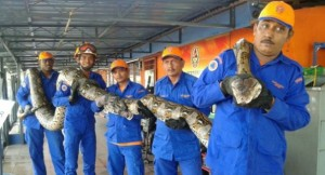 World's largest snake dies in childbirth, according to officials