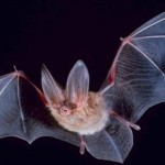 Breakthrough: Huge discovery about bats