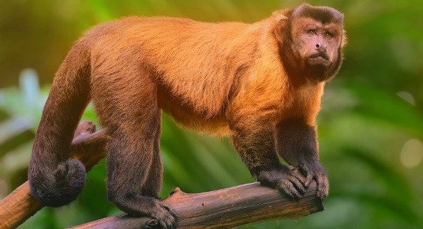 Scientists stunned to learn how monkeys entered North America