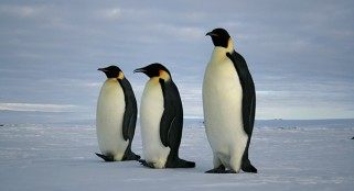 Scientists shocked by massive penguin discovery