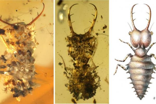 Clever camouflage: The lengths insects went to hide from predators