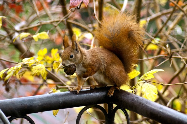 The red squirrel's shocking leprosy secret
