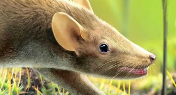 Adorable rodent fossil unearthed in Spain