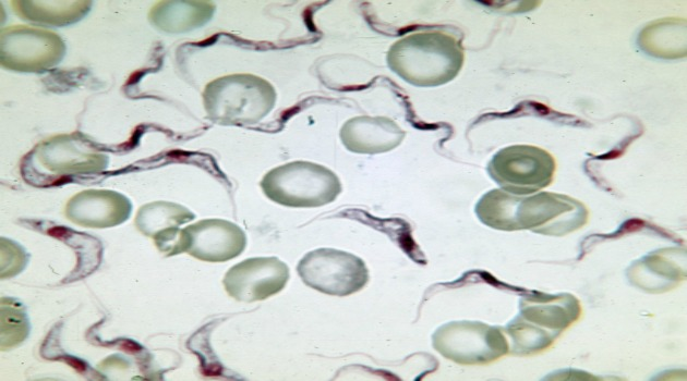 Amazing breakthrough: The new drug that can target three killer parasites