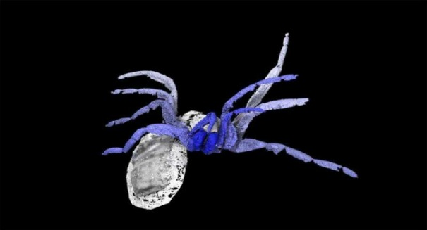 Scientists stunned by bizarre ancient arachnid fossil