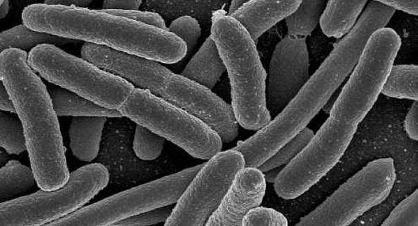 Could gut bacteria be the key to losing weight?