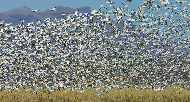 The perilous paths of migratory birds pose significant risks