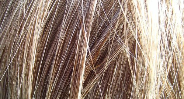 Amazing: Hair proteins could revolutionize forensic testing