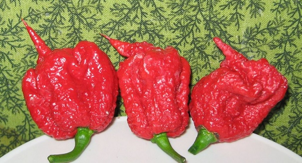 Huge controversy erupts over world's hottest pepper