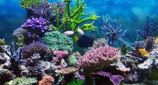Most of world's coral reefs will be gone within next 100 years