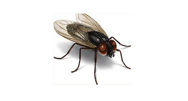 Shocking discovery about the common house fly floors scientists