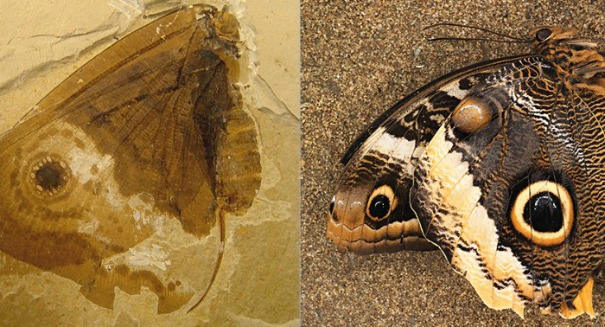 Scientists shocked by ancient Jurassic butterfly