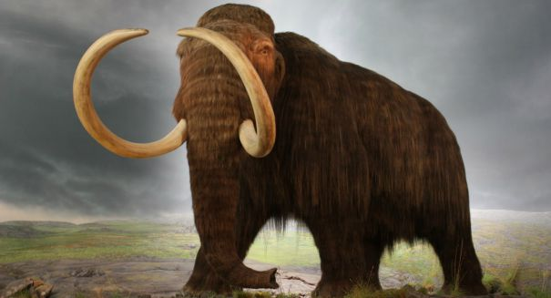 Michigan farmer unearths massive wooly mammoth skeleton