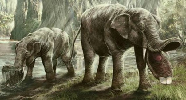 Humans or climate, what killed the mastodons?
