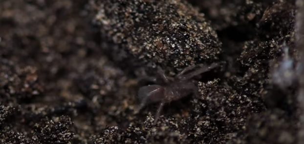 Rare spiders suddenly invade British zoo [VIDEO]