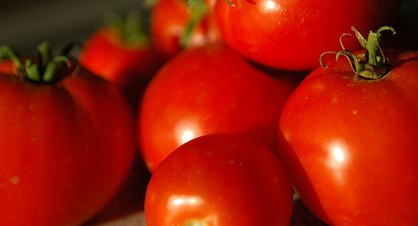 Study: Tomatoes can turn caterpillars into cannibals