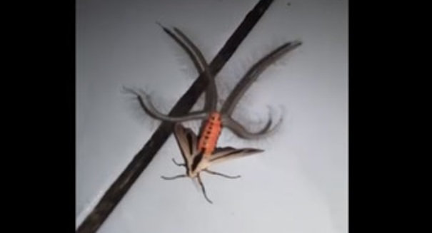 Terrifying creature sends Internet into a frenzy (VIDEO)